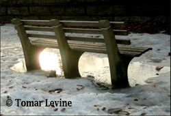 Tomar Levine's park bench photo